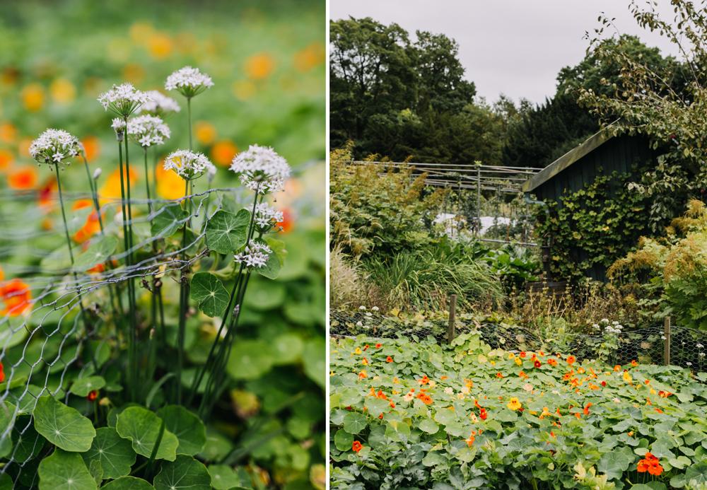 Chatsworth-gardens-eva-nemeth_09.jpg