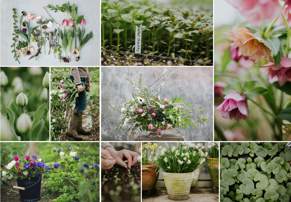 Spring at  Green and Gorgeous Flower Farm  - Commissioned by  House&Garden Magazine