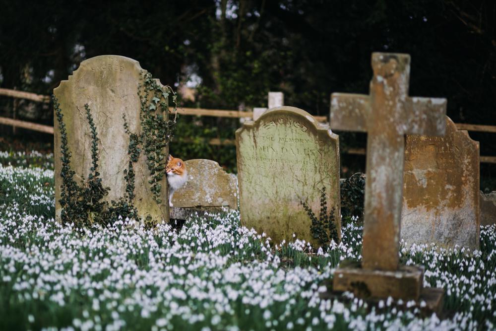 swyncombe-snowdrops-churchyard-oxfordshire-evanemeth_11.jpg