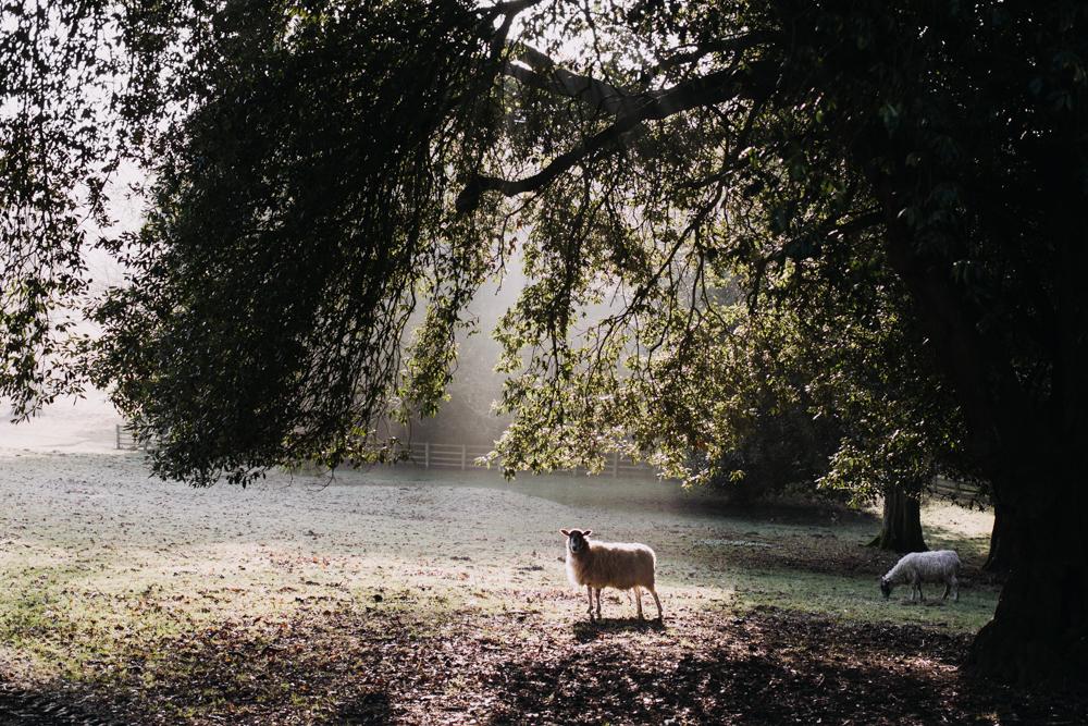 swyncombe-snowdrops-churchyard-oxfordshire-evanemeth_15.jpg