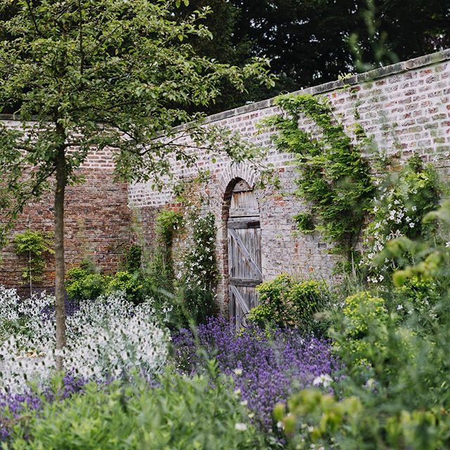 I thought that today I would share here something of my proper work, not foxgloves or Henry. I then forgot about it until the postman came with the July issue of @gardens_illustrated Last year I photographed this stunning walled garden designed by @tomstuartsmith. You'll find the whole story - beautifull written by @verde_flowers - in the July issue of Gardens Illustrated. Oh, and a front cover. Pinch me.