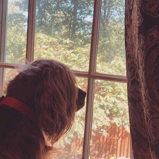 "Working through the dog days of summer. ""It was you who set all the boundaries of the earth; you made both summer and winter"" (Ps. 74:17). #dogs #summer #truthintheair #psalms"