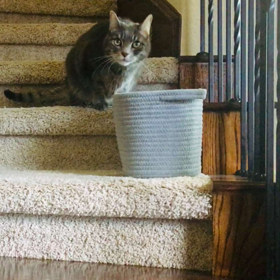 - Keep a basket on your stairs to gather items to take up or down in one trip. WARNING: Do NOT put cat in basket.