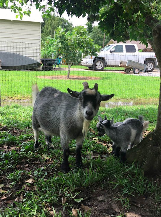 Unrelated, but it feels important to note that I got to hold baby goats on Sunday...