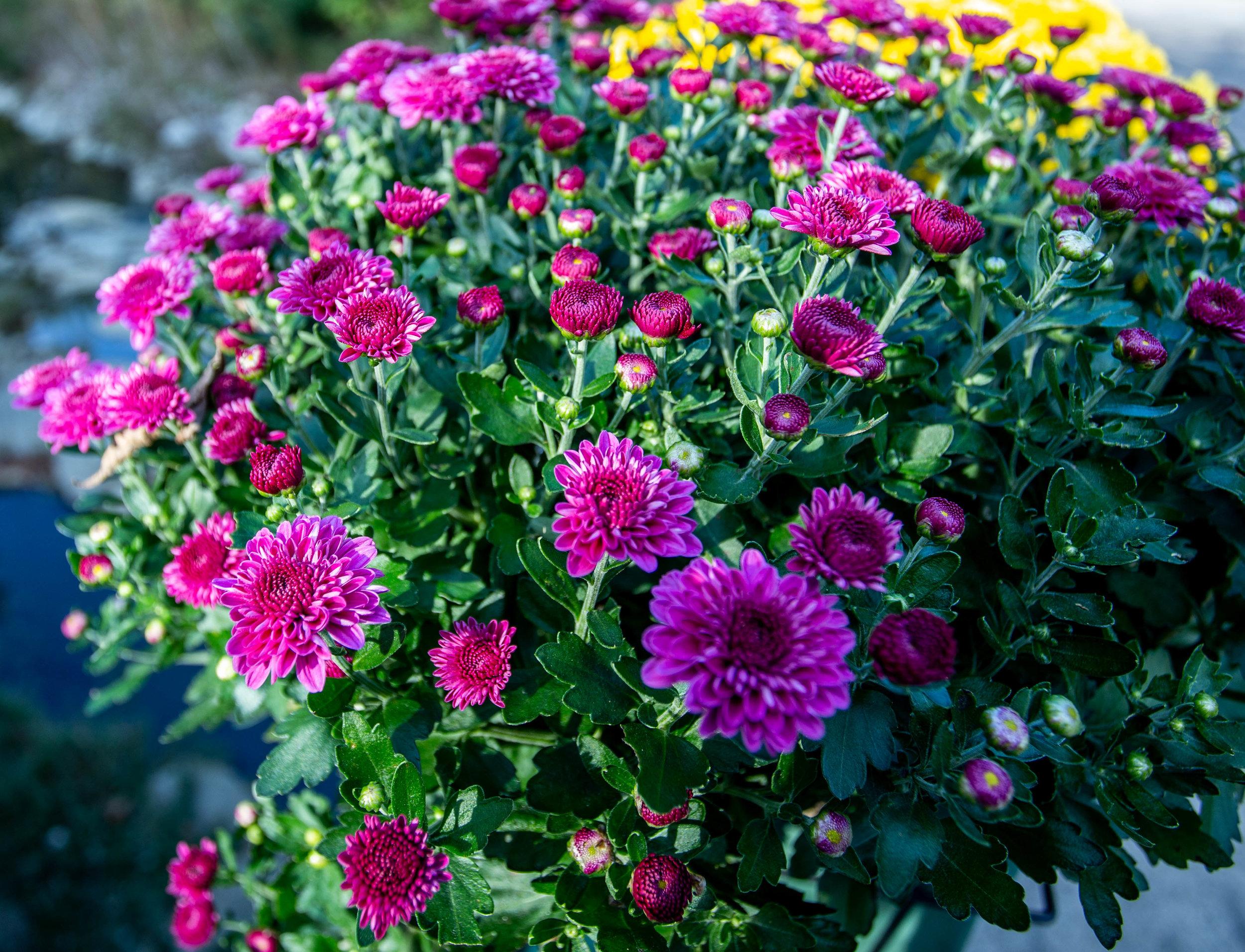 flowers closeup-1143.jpg