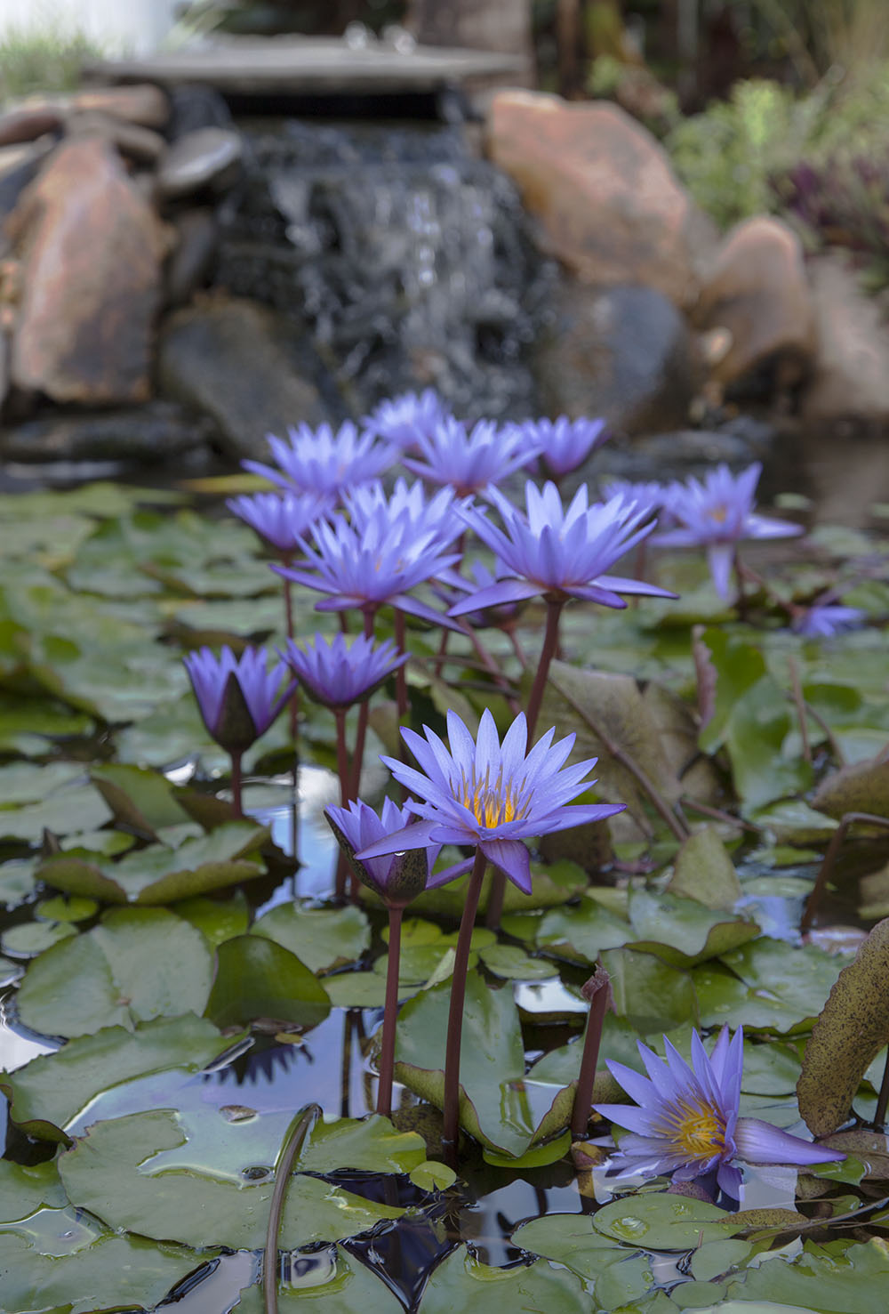 Pros-and-Cons-of-the-Best-Ponds-Plants.jpg