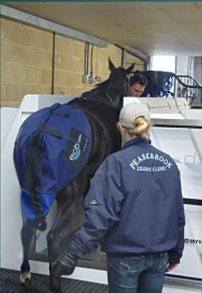 Loading a horse into the Spa