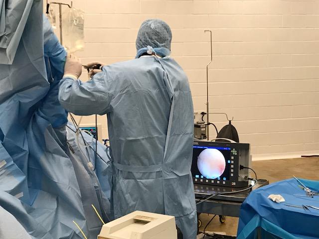 Arthroscopic surgery on a carpus