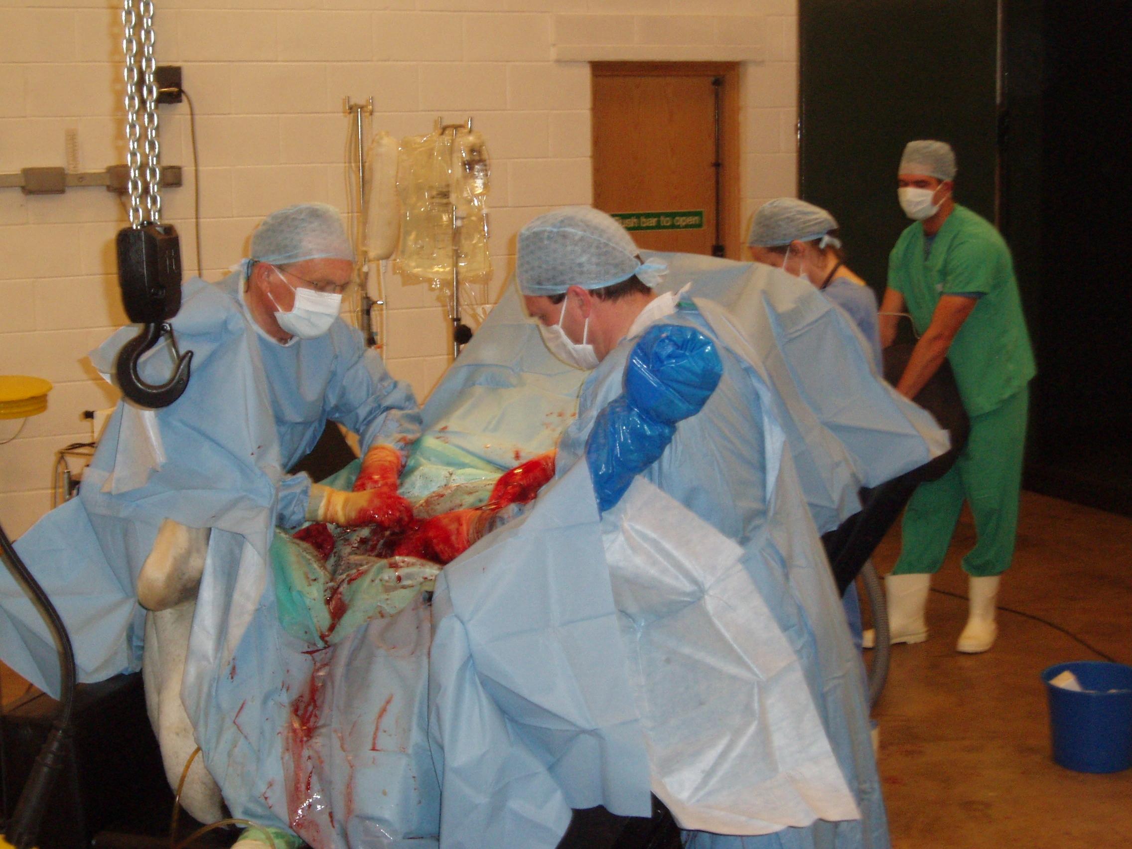 Hylandra Caesarian Surgery 006.JPG