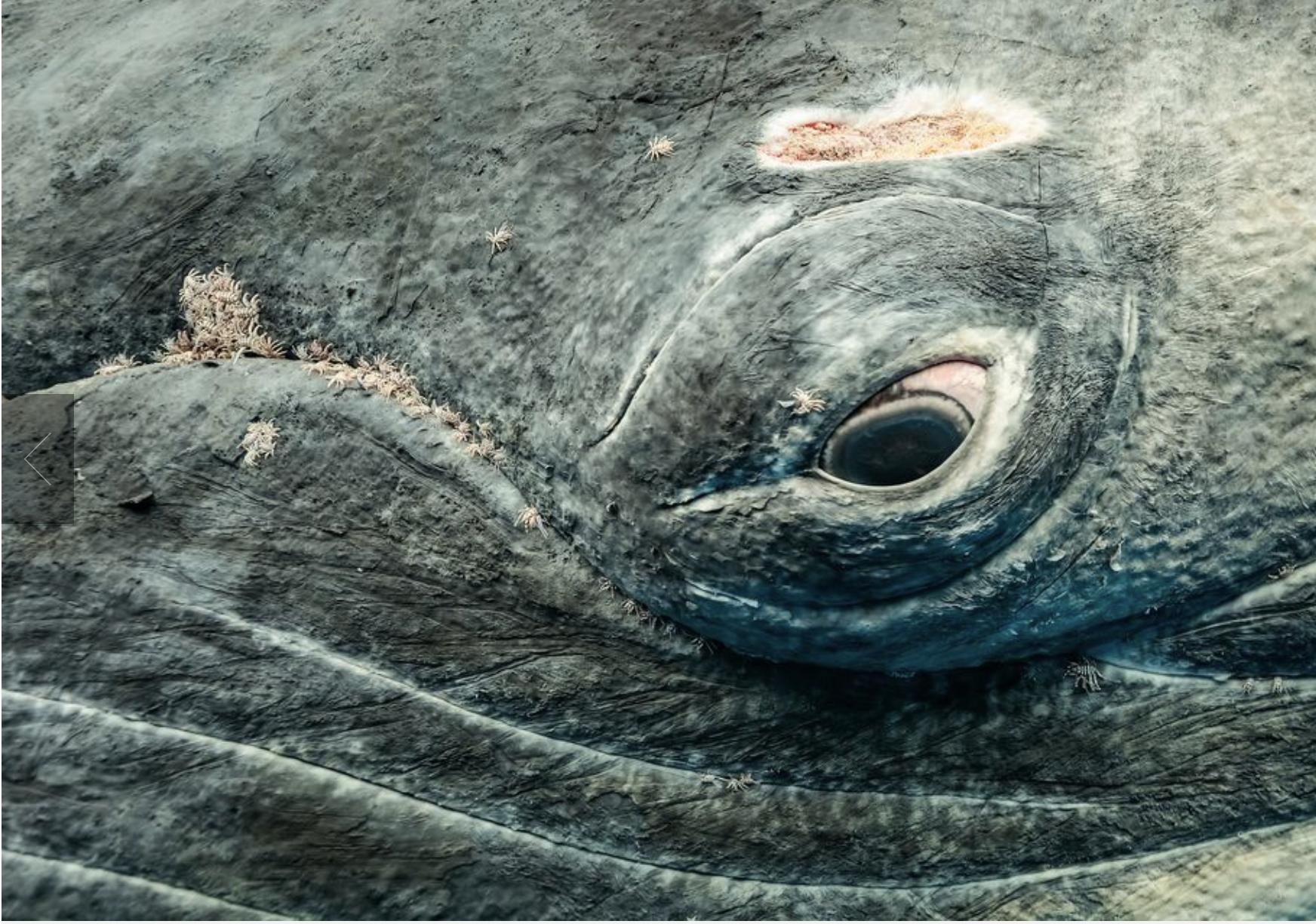 2017 National Geographic Winner: Underwater, Michael Smith
