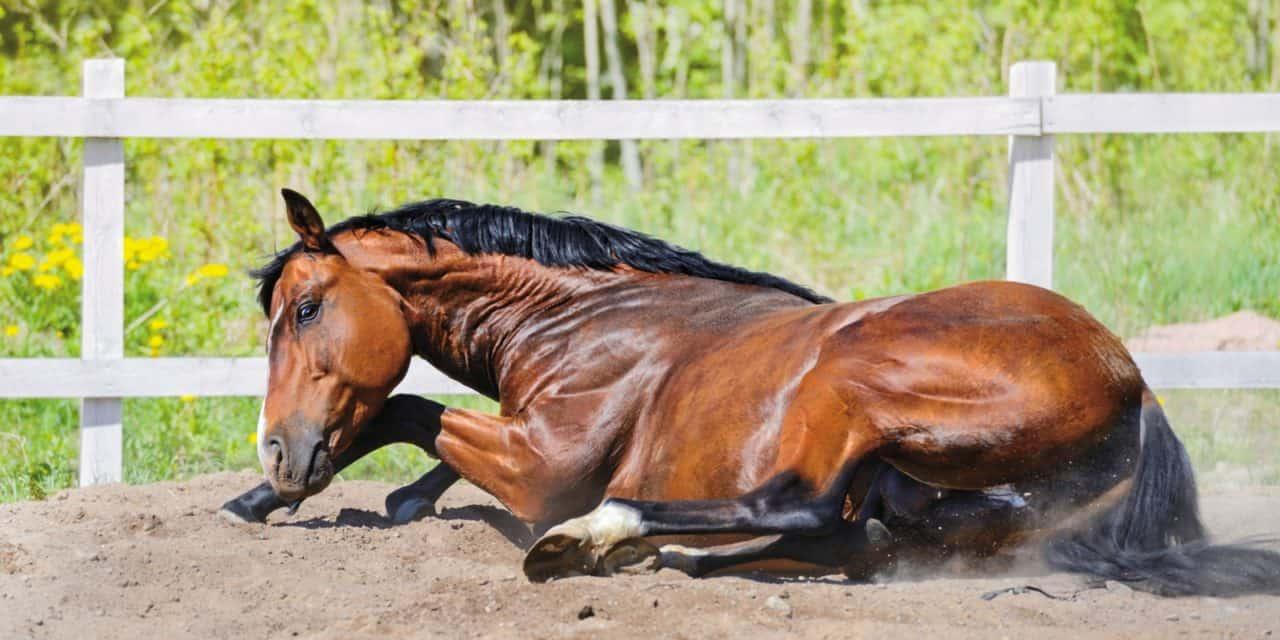 horse-rolling-1280x640.jpg