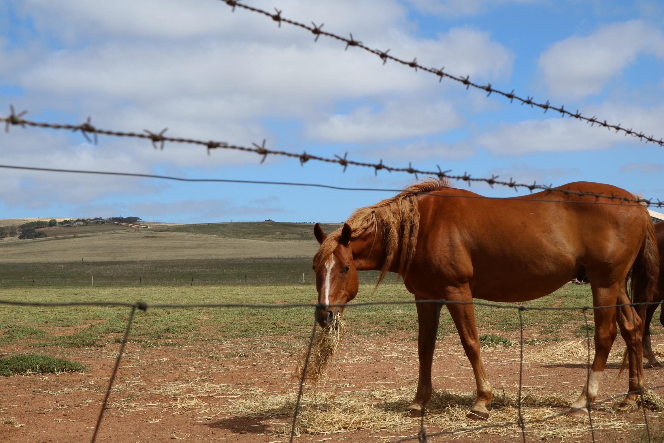 dry_pasture.jpg
