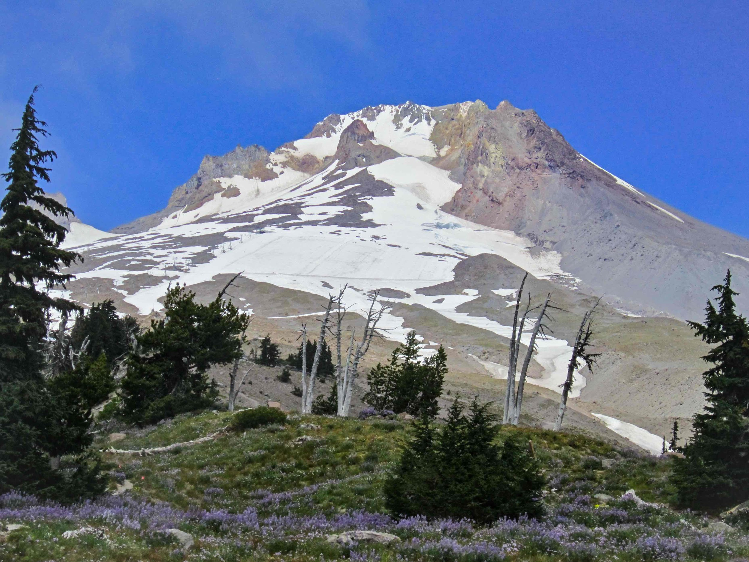 Wild Flowers emerge below Mount Hood, Oregon