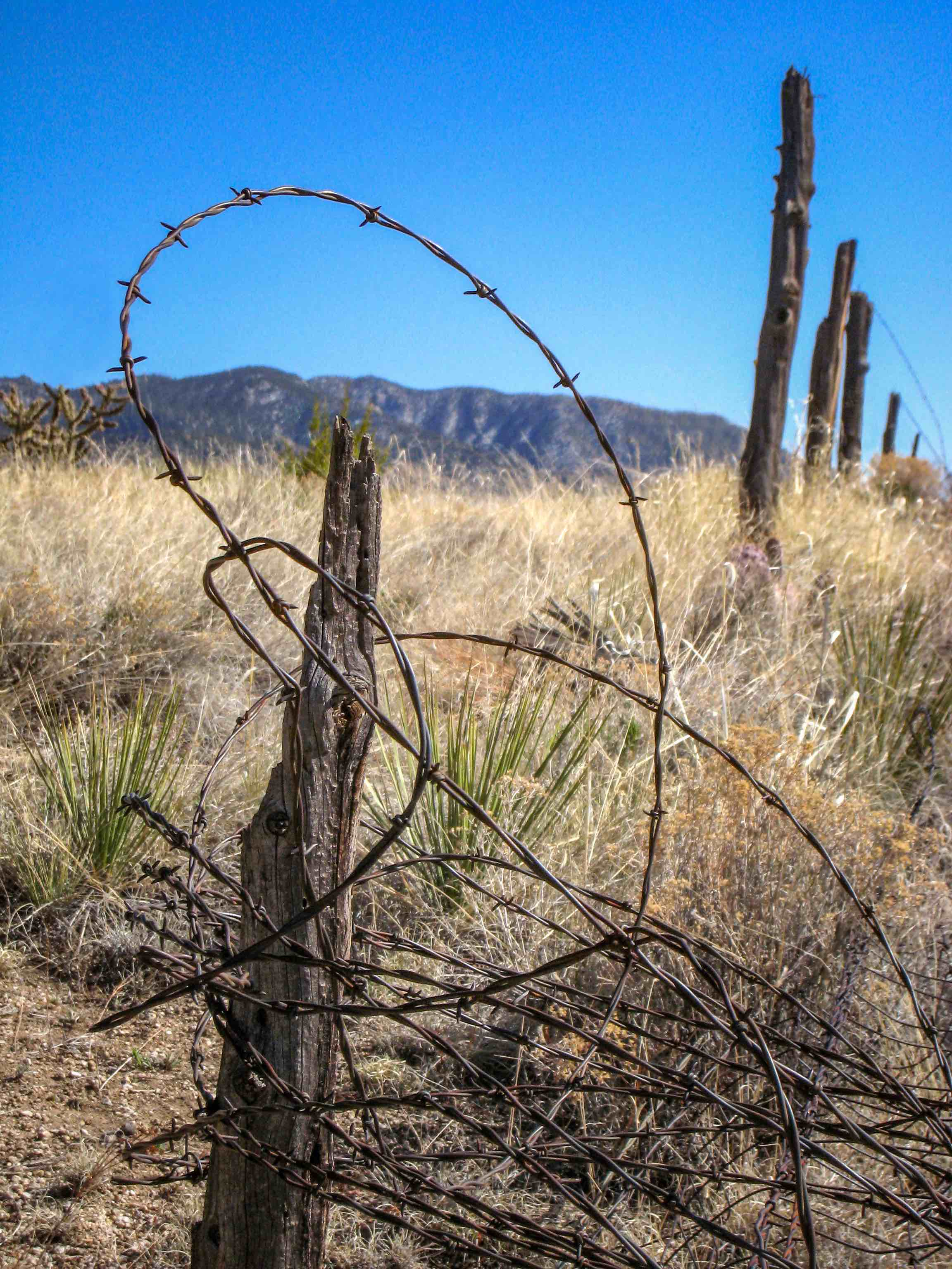 Western Fence Wire