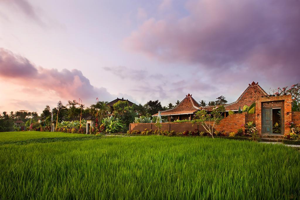 ricefields.jpg