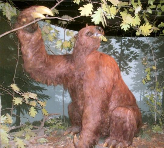beaver eater.jpg