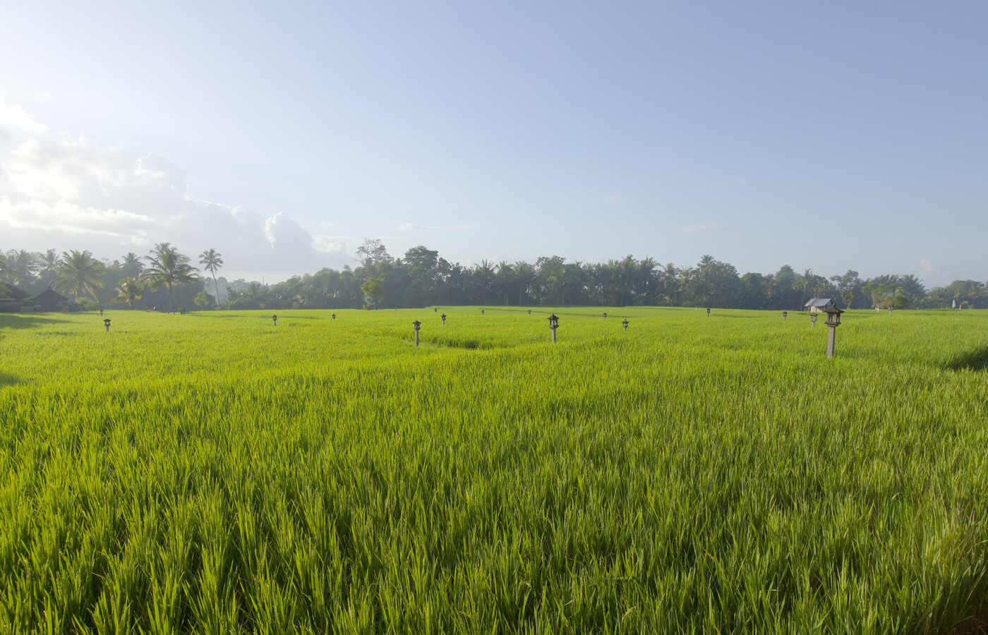 CTG-Overview-Outdoor-Rice Field View 01.jpg