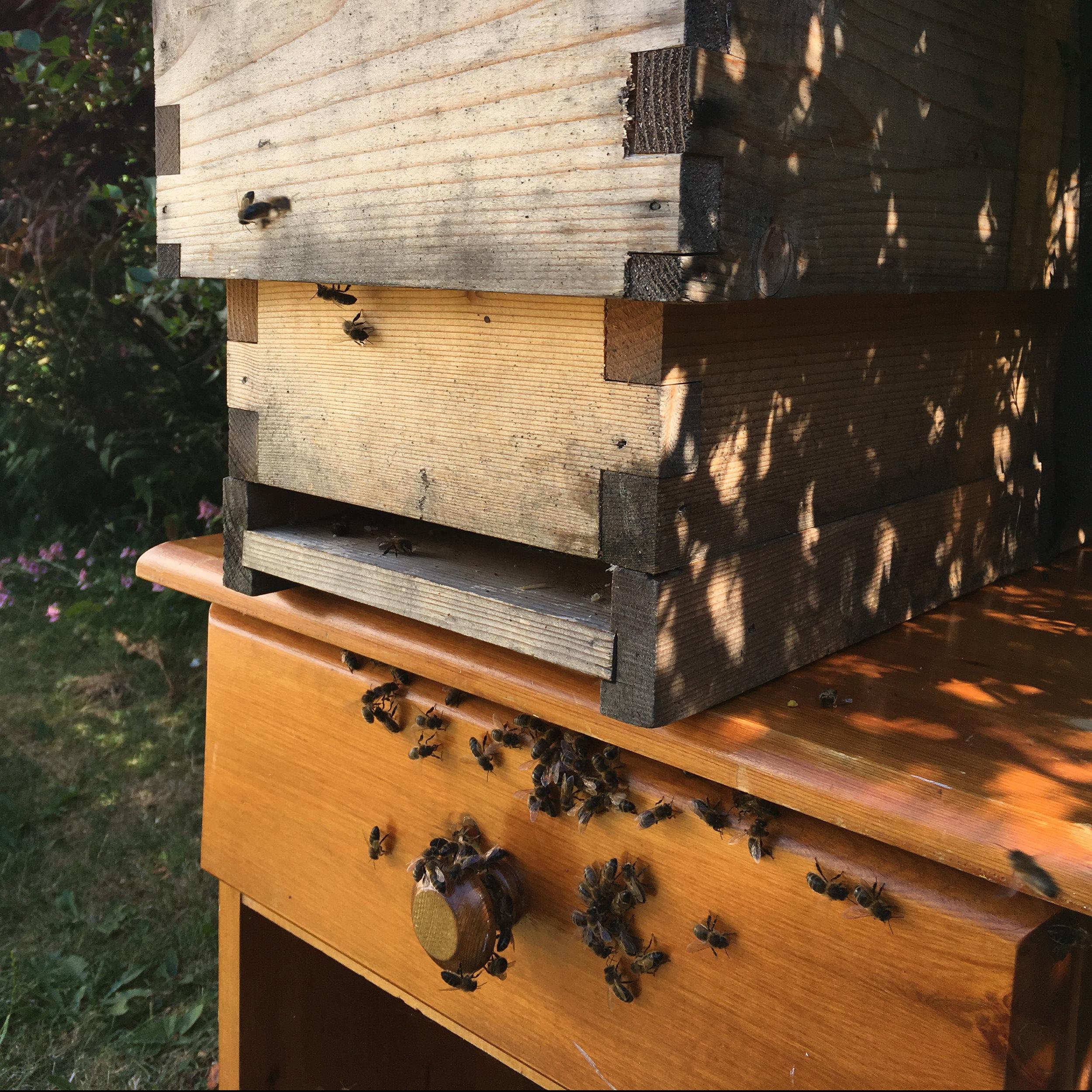 Bee Stewardship2.jpg