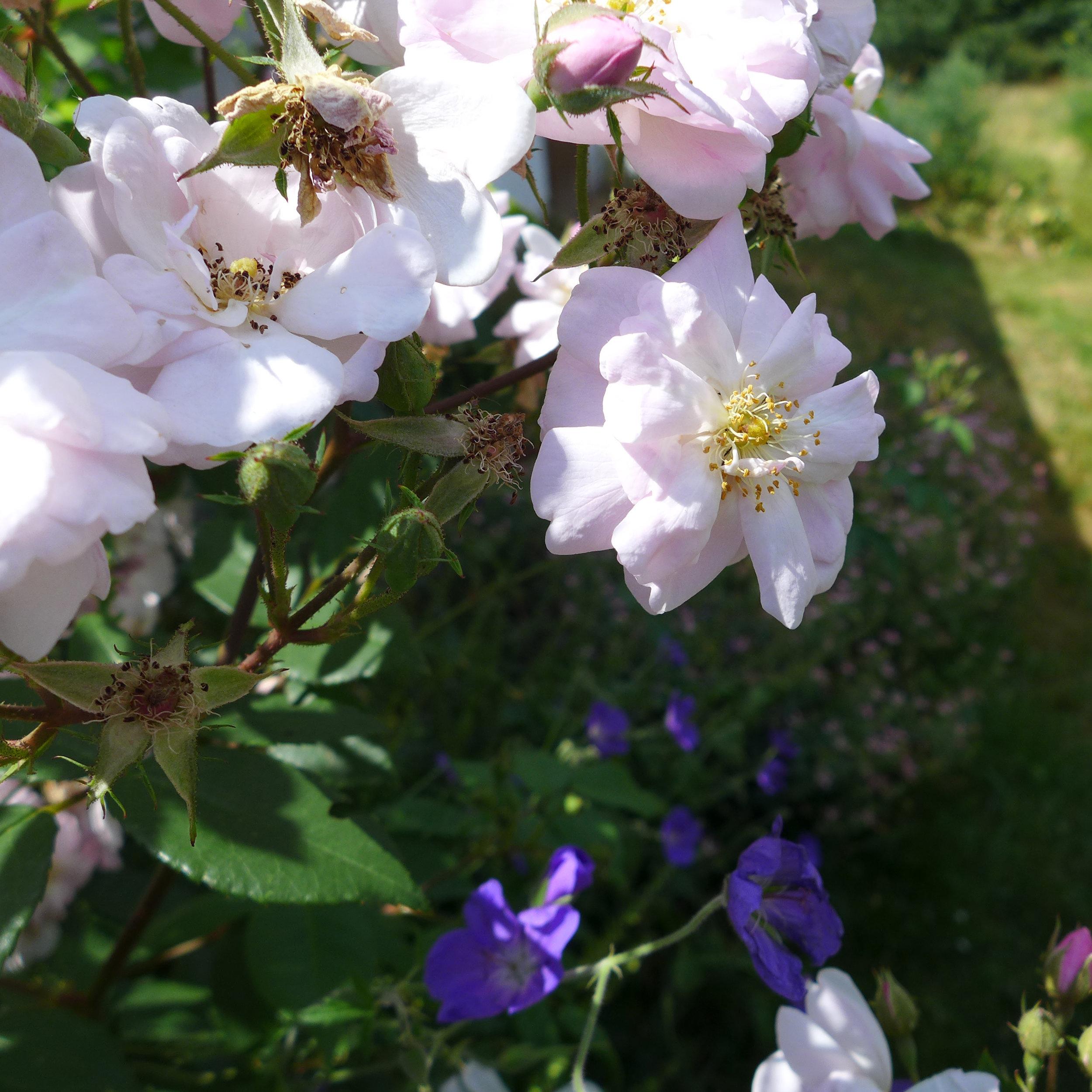 Bee Stewardship5.jpg