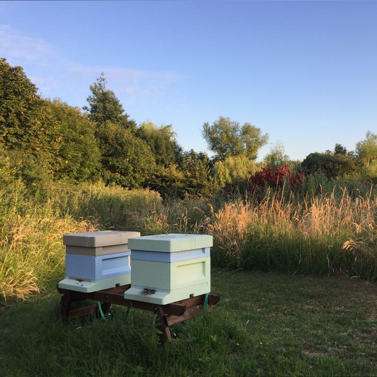 Bee Stewardship.jpg