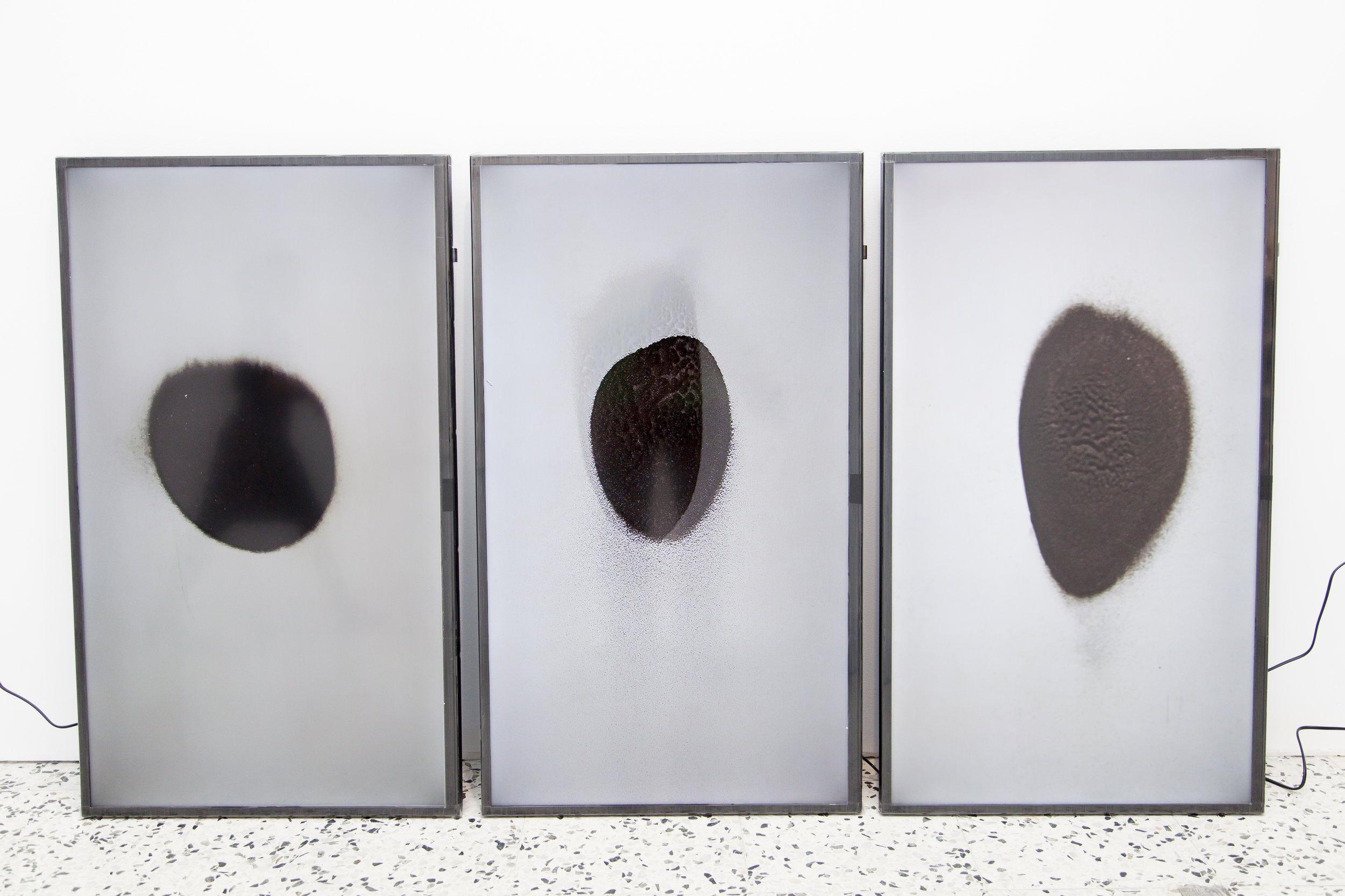 Gabriel Roca | Crudo