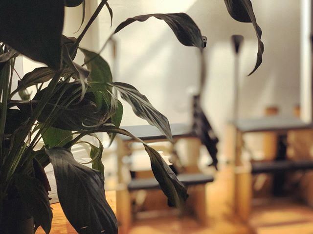 The only thing in life that is constant, is change. And like our plants, we're growing. ▫️More Space for independent instructors. ▫️More Space for intimate group reformer classes (6 Reformers per class). ▫️More Space for more community. . . . . . #thespacepilates #pilatesreformer #pilatesclass #pilates #spring #class #reformerclass #nyc #newyorkcity #flatiron #unionsquare #fitness #pilatesteacher #pilatesinstructor #groupclasses #pilatesbody #training #strength #flexibility #balance @balanced_body @thespacepilates