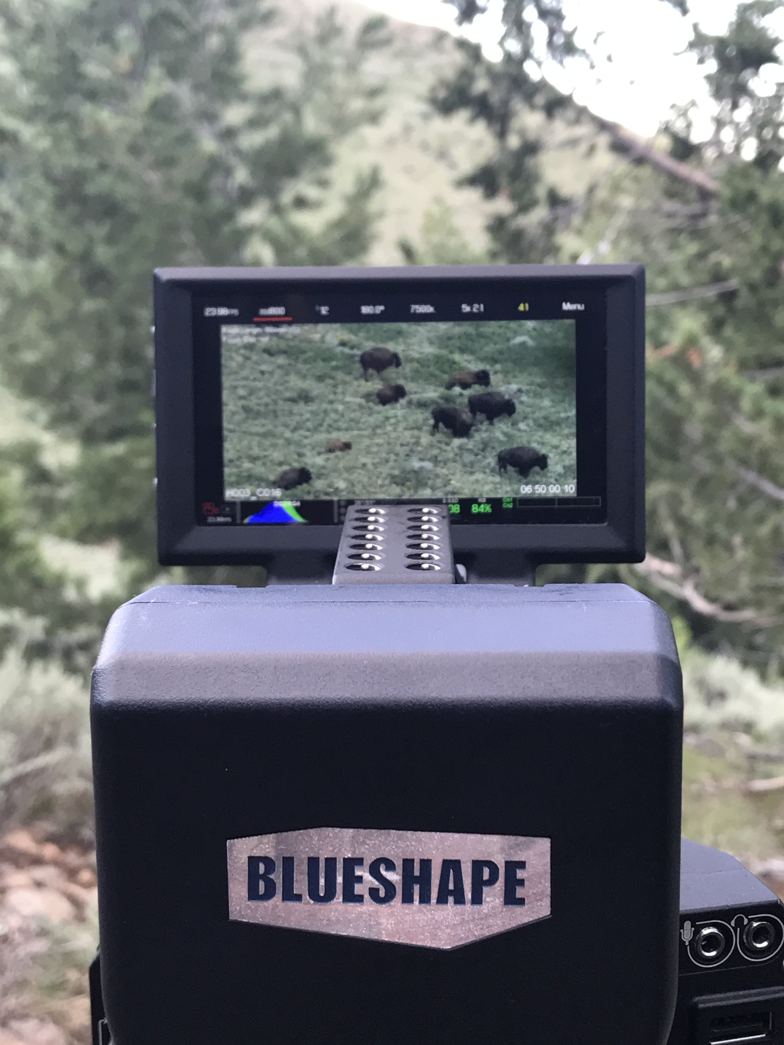 Filming bison on location in the Henry Mountains