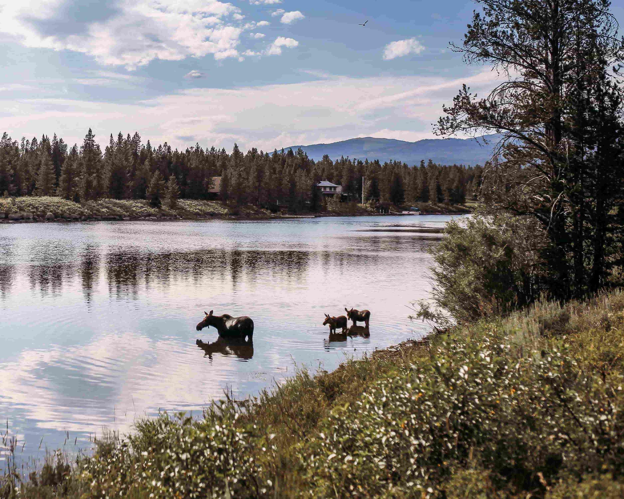 Yellowstone 11.jpeg