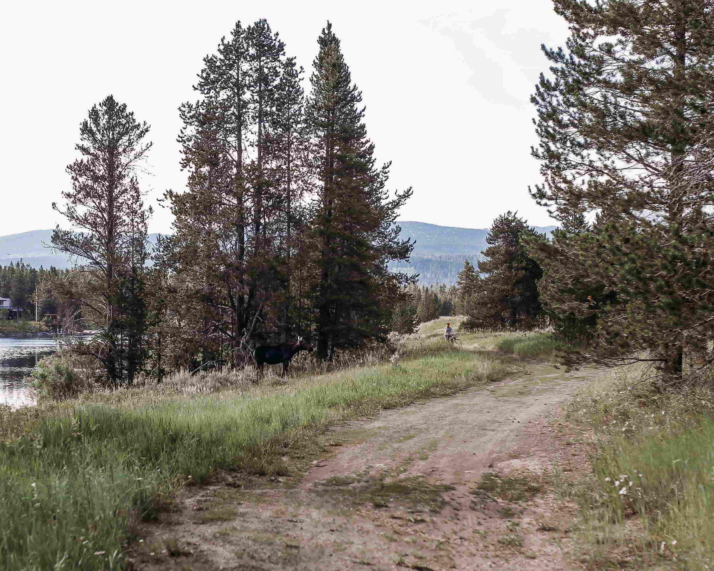 Yellowstone 12.jpeg