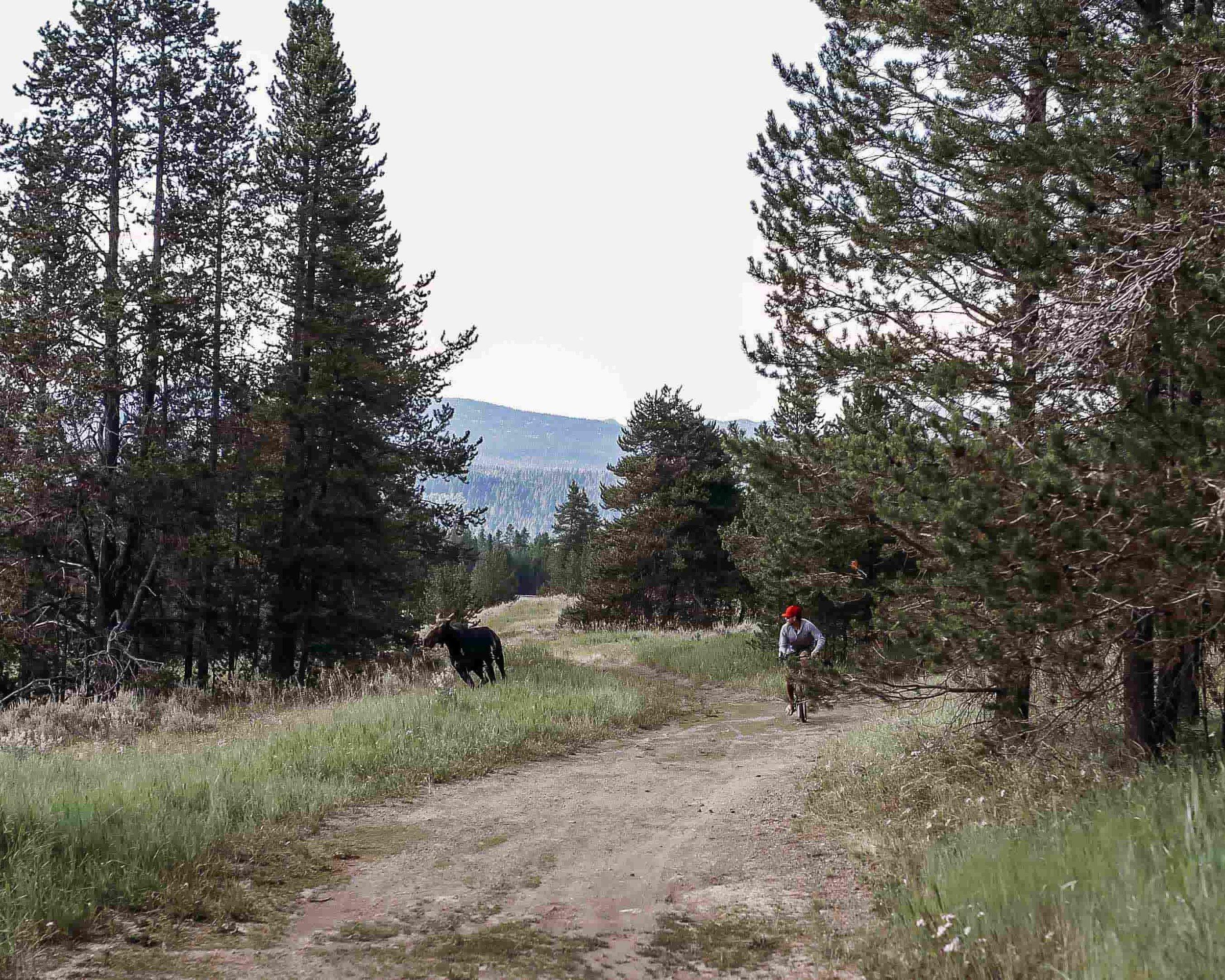 Yellowstone 13.jpeg