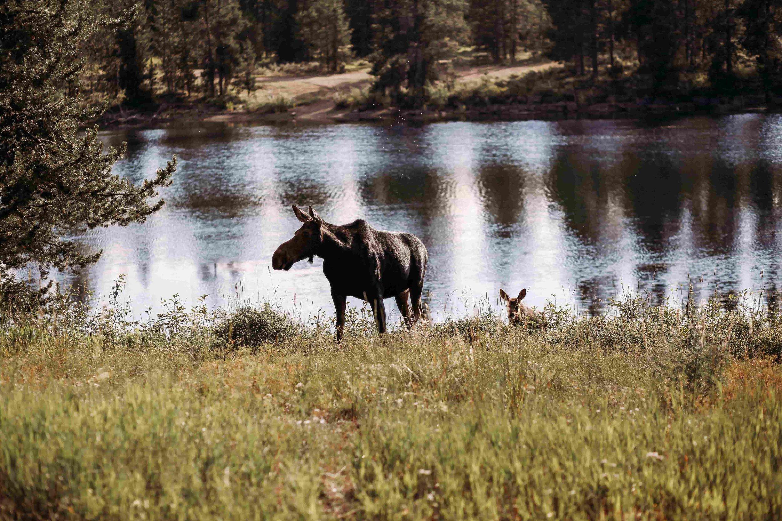 Yellowstone 14.jpeg