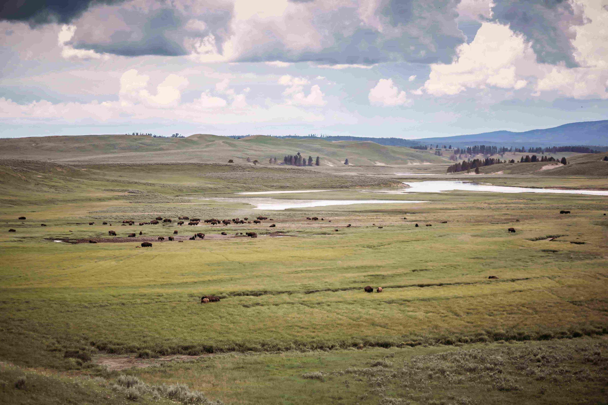 Yellowstone Hayden Valley1.jpeg