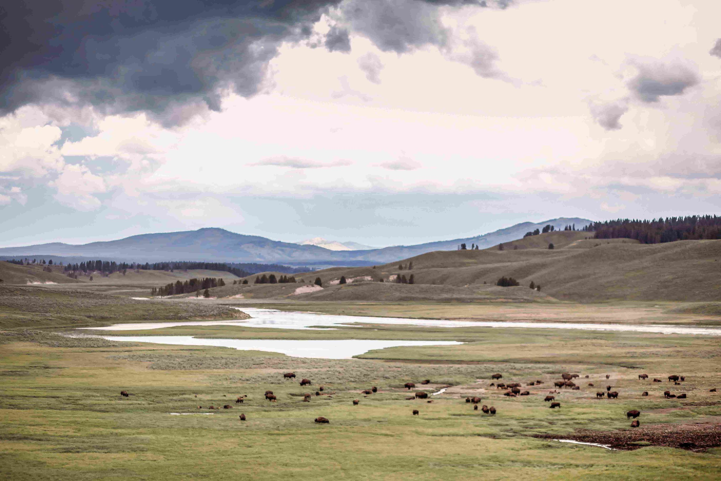 Yellowstone Hayden Valley7.jpeg