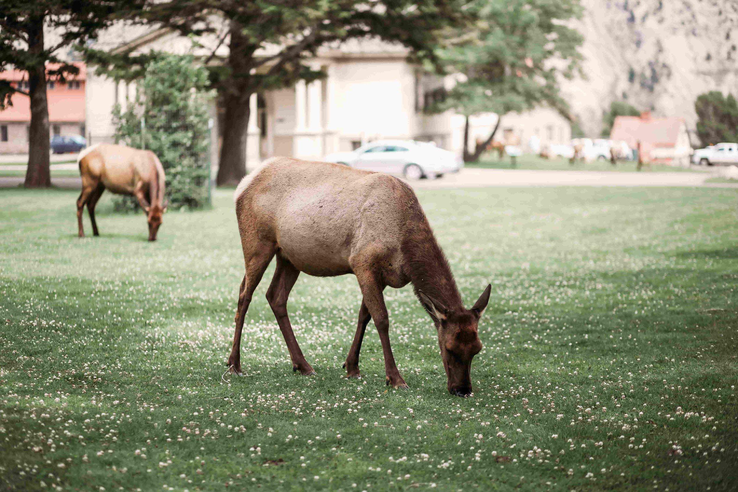 Yellowstone Visitor Center1.jpeg
