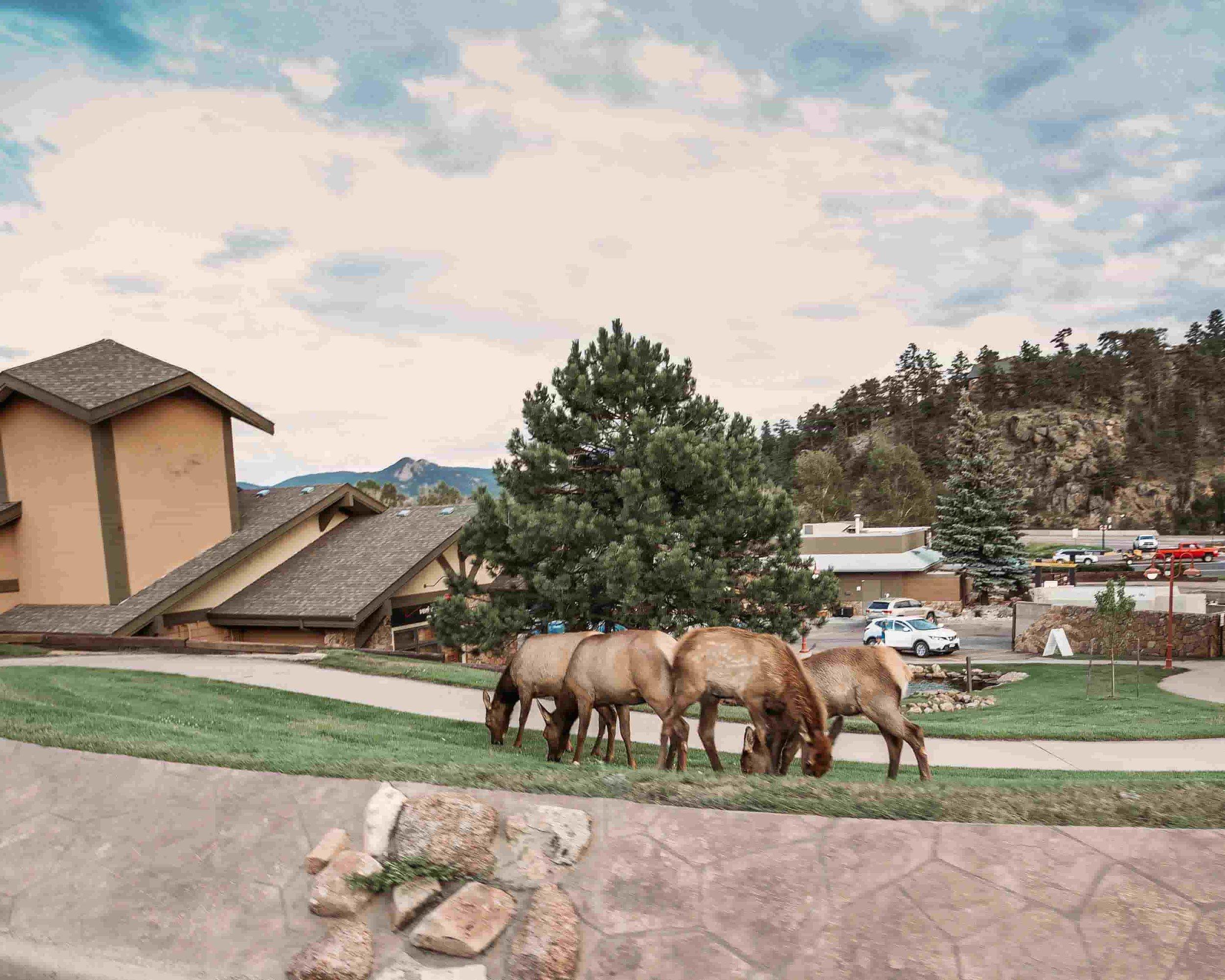 RV Travel, Rocky Mountain National Park00008.jpeg