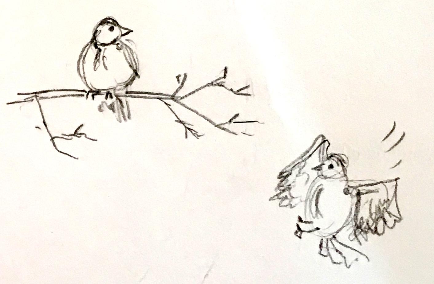 birds-03.jpg