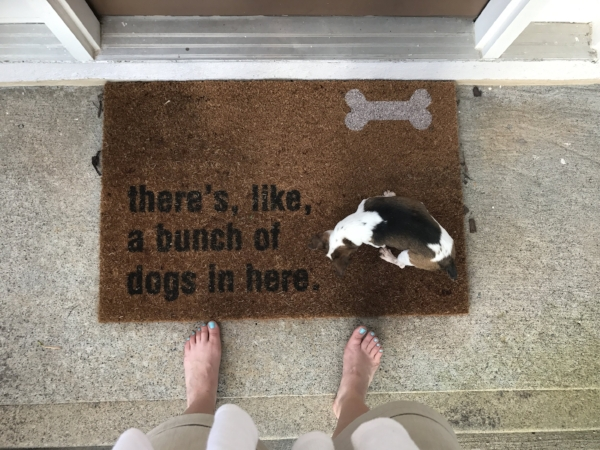 There's always a bunch of dogs in our house. Always.