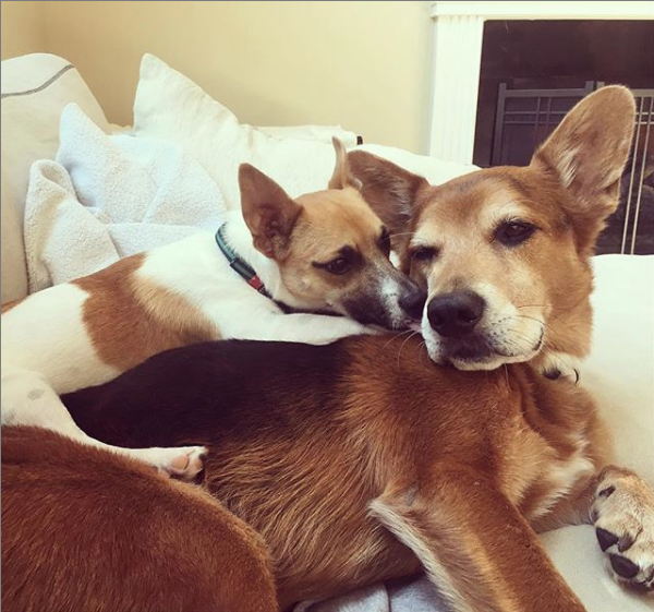 Huckleberry giving Rigby sweet brother kisses.