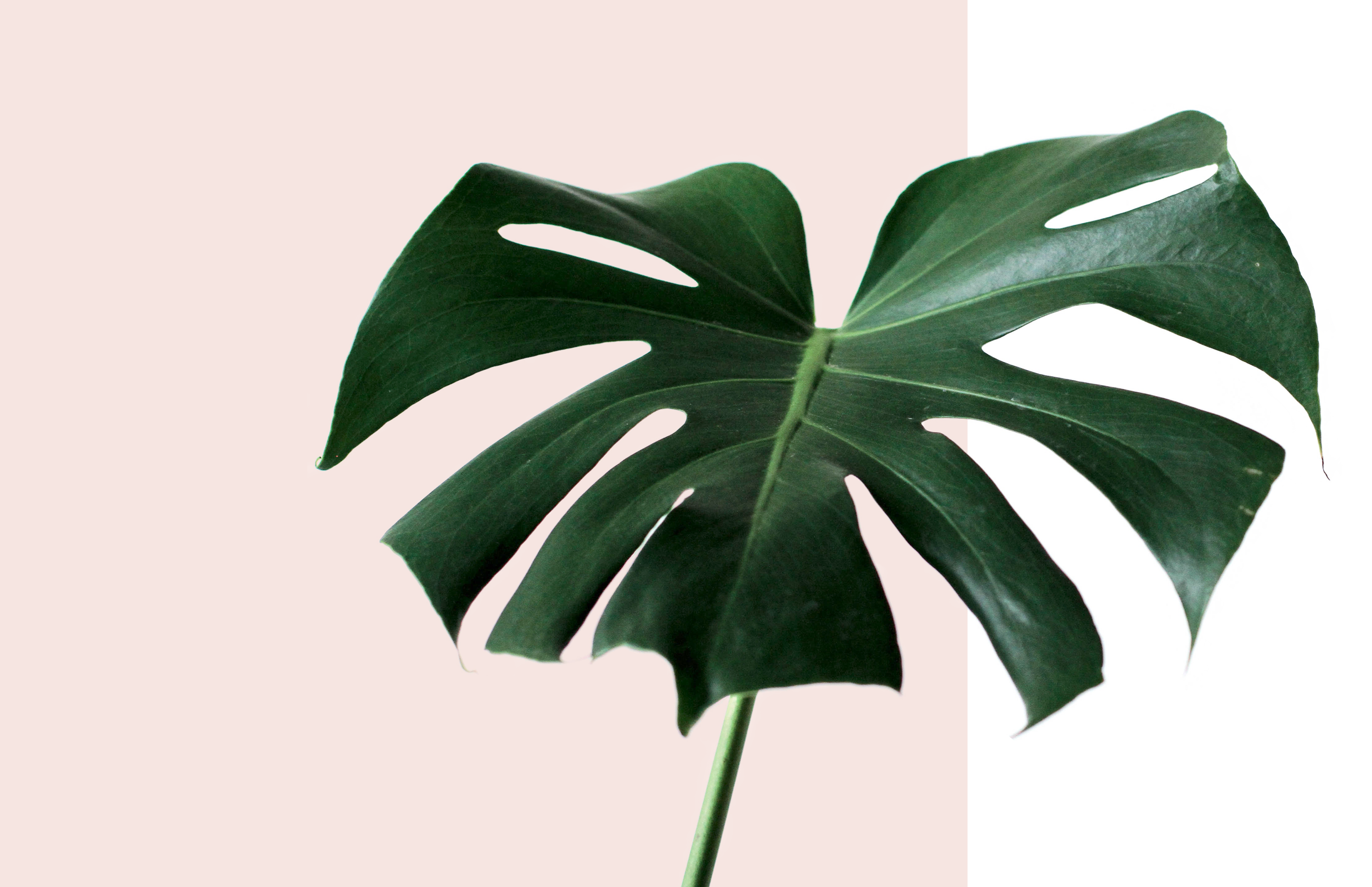 Hair-And-Co-Pensacola-FL-Home-Monstera.png