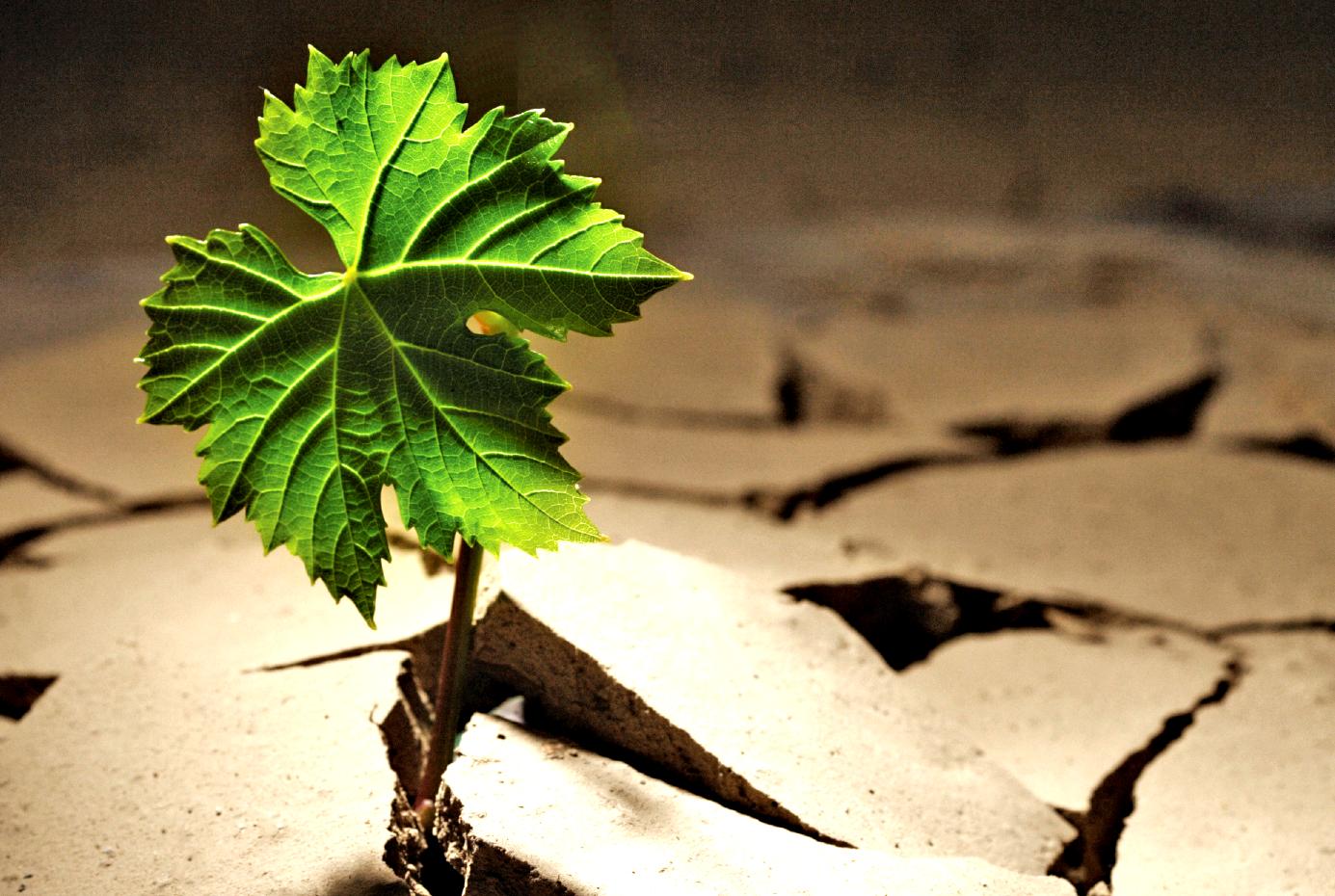 leaf-ground-logo.png