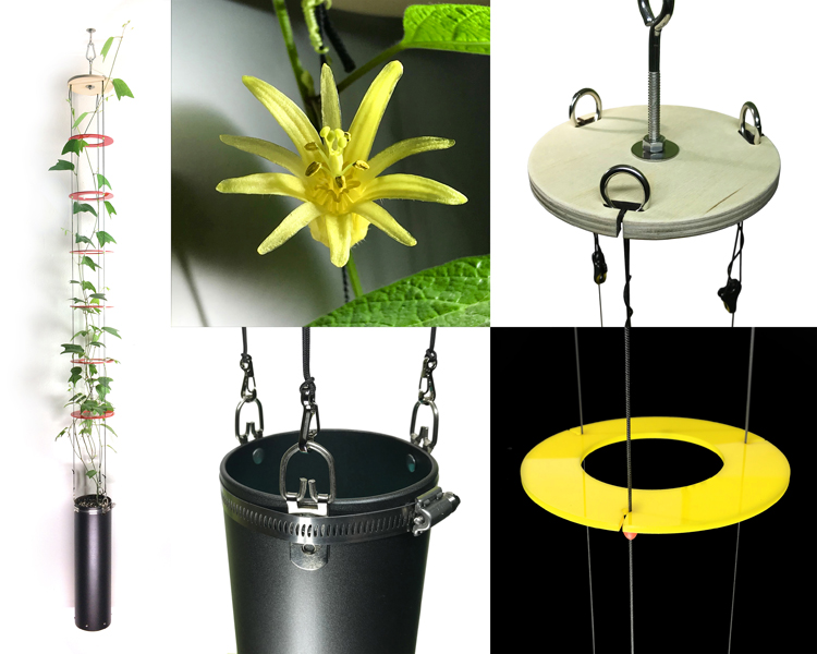 Quantum Vertical Garden Planter with  Passiflora citrina . The bright red vertical spacer rings contrast with these yellow Passionvine blooms. Stainless steel hardware and other parts complement upcycled-industrial interior décor.