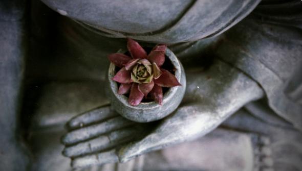 Buddha hand flower.png