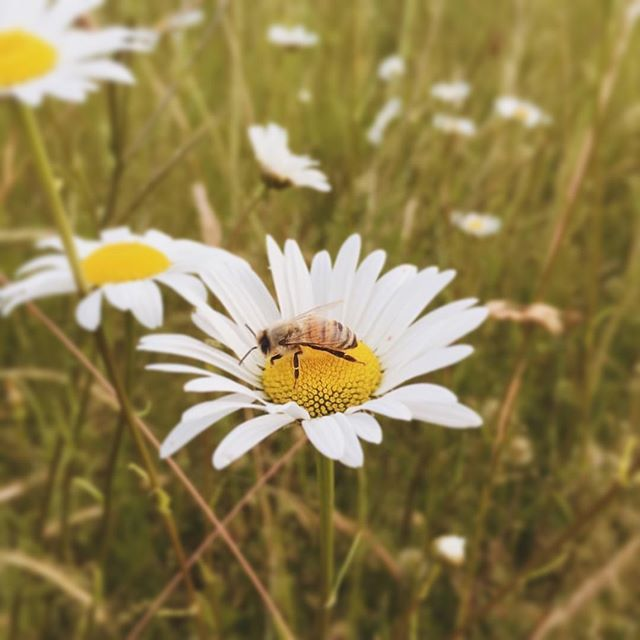🤗🐝💛 Hi everyone! Just letting y'all know I'm still here, and still taking beautiful pictures for people (and bees). I am terrible about keeping this account updated, but very good at being a photographer. 😉
