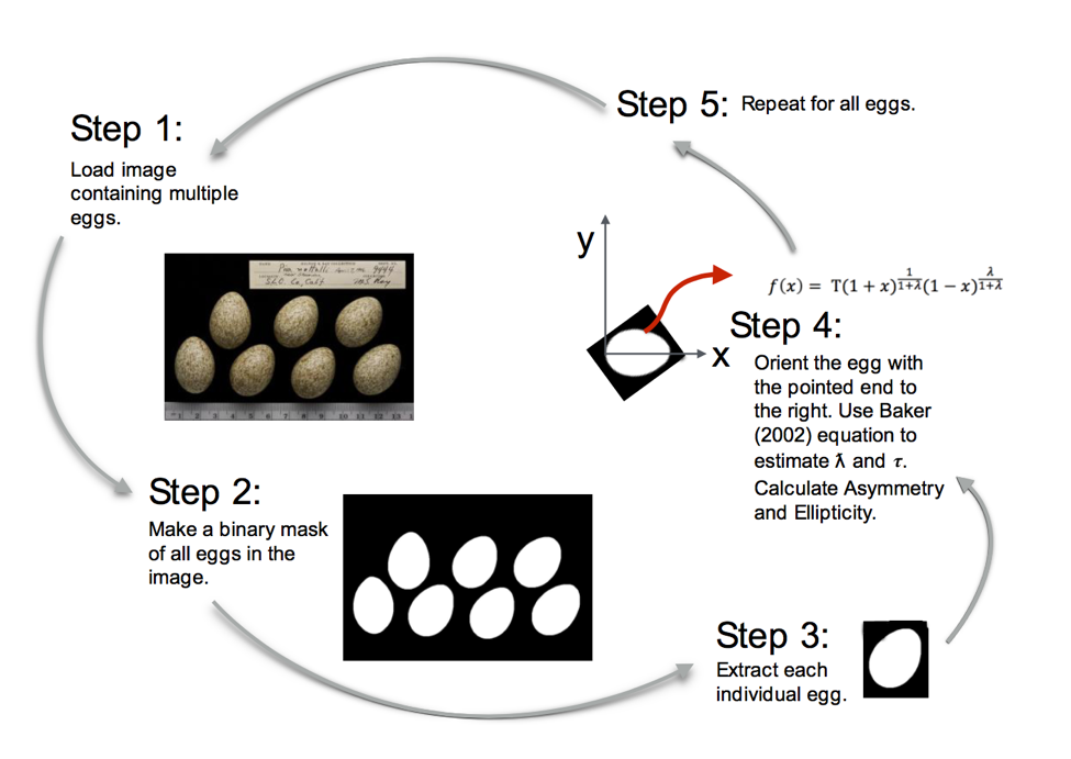 Eggxtractor.png