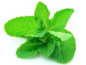 Holy Basil aka Tulsi is an adaptogenic herb that can be used to fortify the body so that it is more able to handle mental, emotional and physical stress with more ease.  Why is that important? Because accumulated stress causes toxicity in the body which effects digestion, elimination and metabolism.
