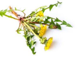 Dandelion leaf has been shown to have diuretic effects on the body. So if you feel bloated and like you are retaining water, try to incorporate dandelion tea into your day.  Dandelion is also regarded as a liver and kidney tonic in traditional medicine, and has often been used to improve digestion.
