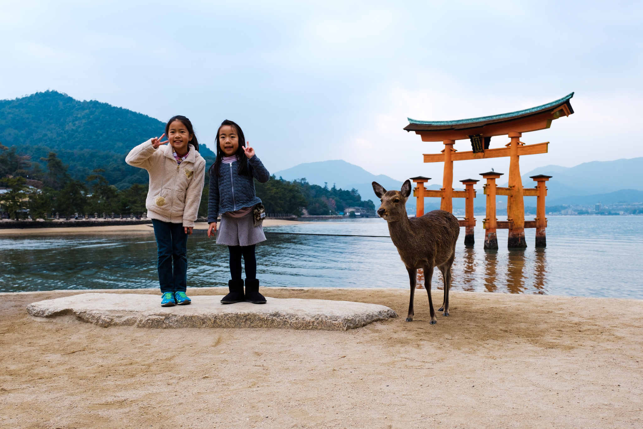 We knew that there were deer in Nara Park, but I was pleasantly surprised that they could be found on Miyajima Island as well.