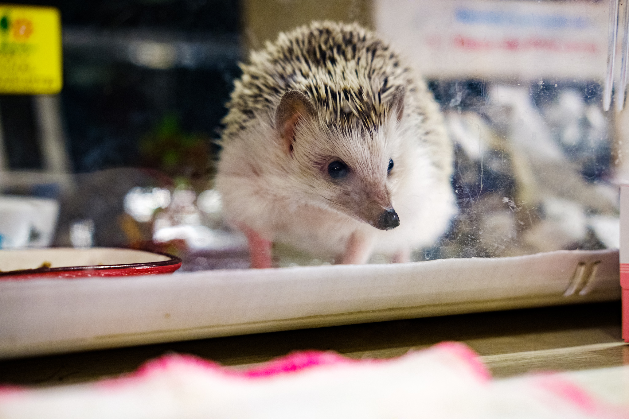 There was even a cute hedgehog!