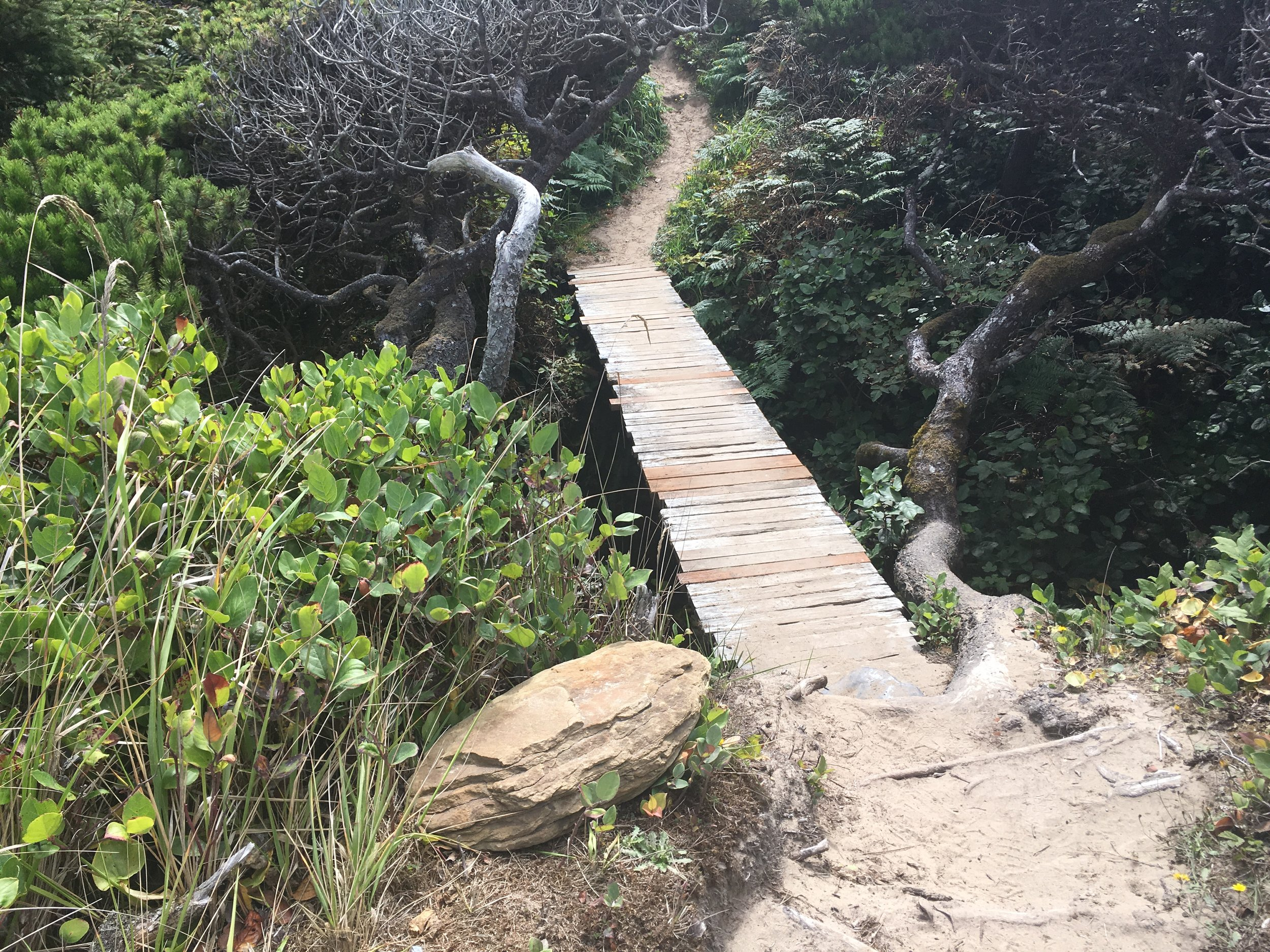 Hobbit Trail Off the Beach at Seal Rock