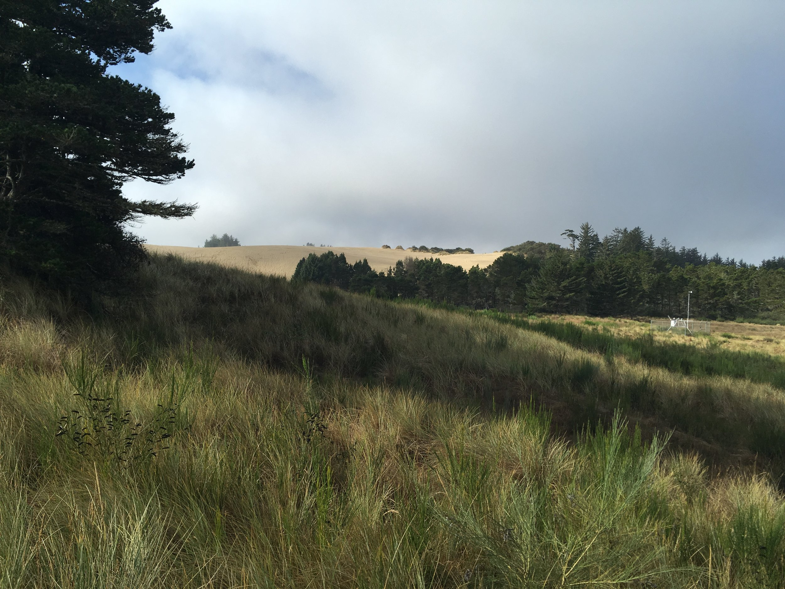 My first glimpse of the Oregon Dunes from South Jetty Road.